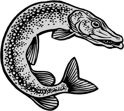 Brochet Illustration