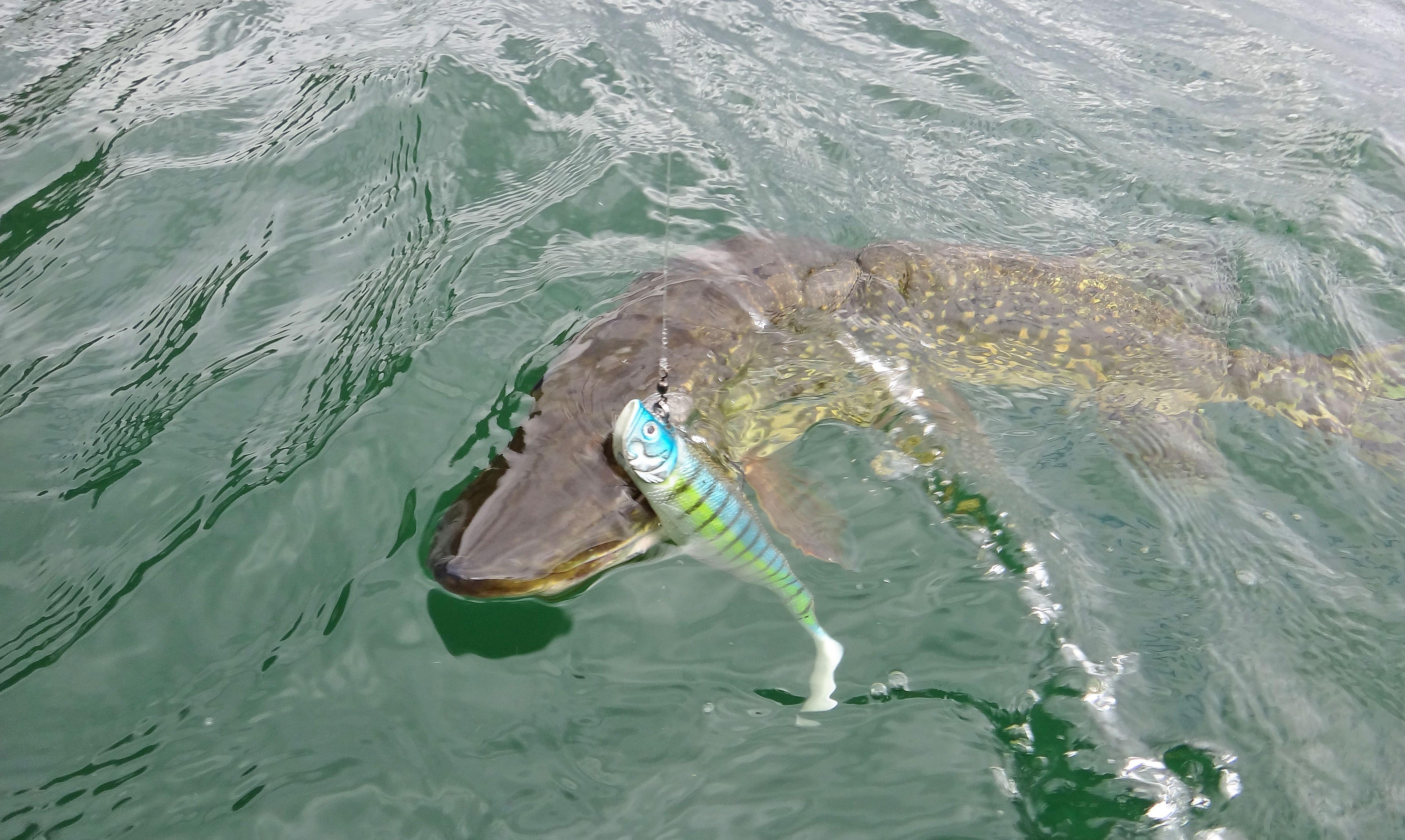 La pêche sur le lac keret le forum